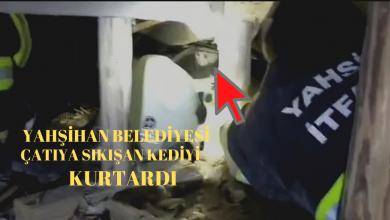 Photo of 4 Gün15 Katlı Apatman Çatısında Mahsur Kalan Kedi Kurtarıldı