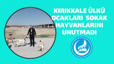 Photo of Kırıkkale Ülkü Ocakları Minik Dostlarımızı Unutmadı